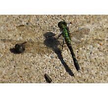 Dragonfly Tilt Shift Photographic Print