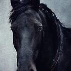black beauty by lucyliu