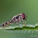 Hover at rest by Rick Playle