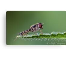 Hover at rest Canvas Print