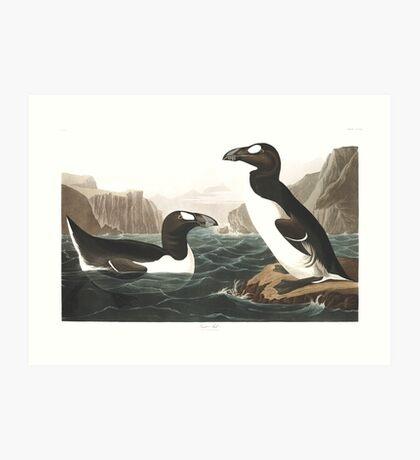 Great Auk - John James Audubon Art Print