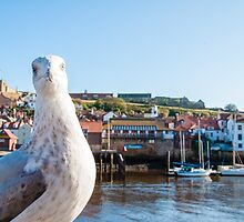 Scenic view of Whitby city and abbey with seagull  by Stanciuc