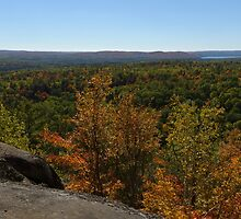 The Scenic Overlook - Algonquin in the Fall by Georgia Mizuleva