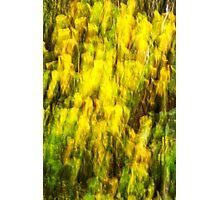 Woodland Abstract. Three of Three. Photographic Print
