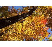 Vivid Yellows, Reds and Oranges - the Joy of Autumn Foliage Photographic Print