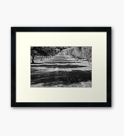 stripes Framed Print
