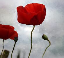 ...... where the poppies blow by Lynda Heins