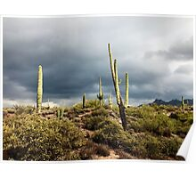 Cacti After Storm Poster
