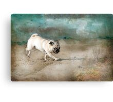 When Pugs Fly Canvas Print