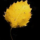 The Golden Leaf by lorilee