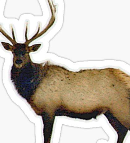 Bull elk 4 Sticker