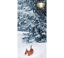 Chihuahua in the Snow - Puppy Winterscape Photographic Print