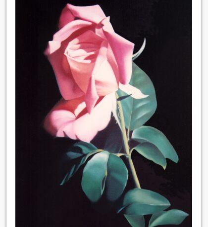 Peach Colored Rose Sticker