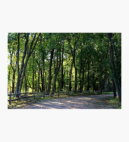 Woodsy Path Photographic Print