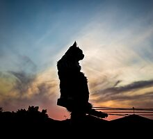 ziggy sunset silhouette by meowscott