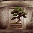 Bonzai Tree by keng612