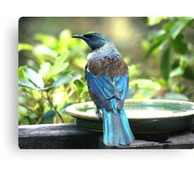 Tui.......Does my bum look big in my new dress......? Canvas Print