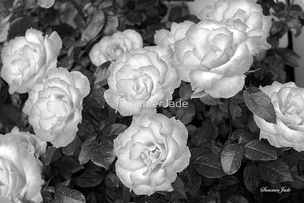 Roses Create Sensations of Summer by SummerJade