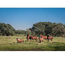 Wild Horses - El Rancho, Brazil Photographic Print