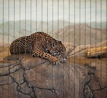 Lincoln Park Zoo - Chicago, IL by Eric Cook