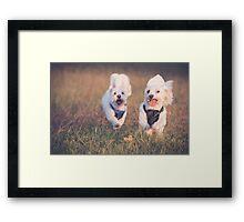 Puppy Fun Framed Print