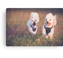 Puppy Fun Canvas Print