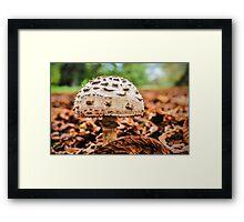 Shroom Framed Print