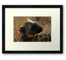 Kruger National Park, South Africa. 2009  IV Framed Print