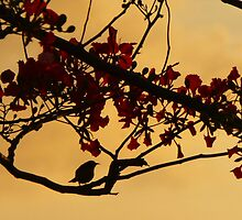 Evening Birdsong by IslandEffect