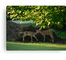 Fawning over you Canvas Print