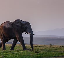 Elephant walking off in the sunset by Fiona Ayerst