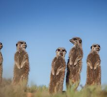 Meerkat Family photo by Fiona Ayerst