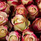 Love Is A Rose III by Al Bourassa