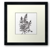 Absinthe Tea Fairy Hyssop Framed Print