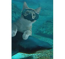 Diving cat Photographic Print