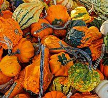 """Don't get my gourd !"" by Nancy Richard"