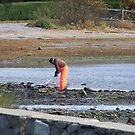 Harvesting the sea ! by Nancy Richard