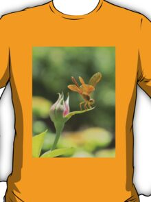 Dragonfly on Rosebud T-Shirt