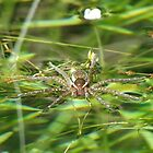 It Floats! Spider by Ingasi
