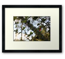 A wild redcurrant growing in the forest Framed Print