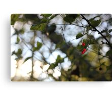 A wild redcurrant growing in the forest Canvas Print
