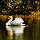 Peaceful Swan on a Lake by imagetj