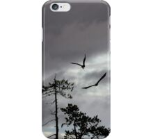 The white-tailed eagles of Kuhmo iPhone Case/Skin