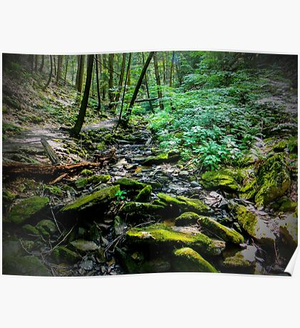 Forests depth Poster
