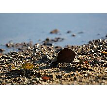 An autumn leaf on a rocky shore Photographic Print