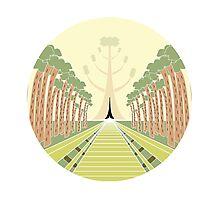 Big Tree Park Photographic Print