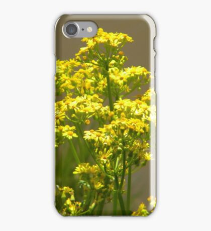 Yellow flowers in bloom iPhone Case/Skin