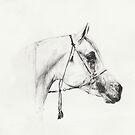 Arabian Horse Sketch by Nina Smart