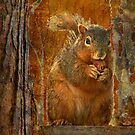 Orange Fox Squirrel by Kay Kempton Raade