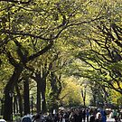 Central Park Fall Colors, New York City by lenspiro